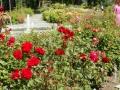 Rote Rosen nn