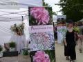 Tag der Rose 2014 Ulm - Stand der Rosenfreunde Ulm