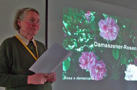 "Frau Vemmer - Vortrag ""Alte Rosen"""